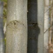 Naturfotografie, Wald, Baum
